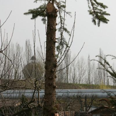 eine deutsche Palme